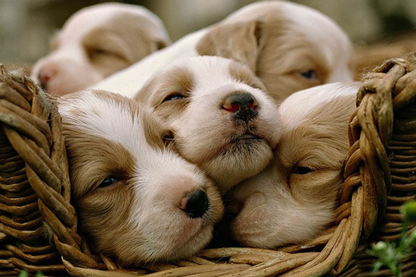 How to Care for Dog Puppies