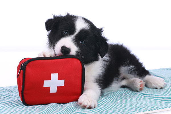 When Should I Take My Pet To An Emergency Clinic?