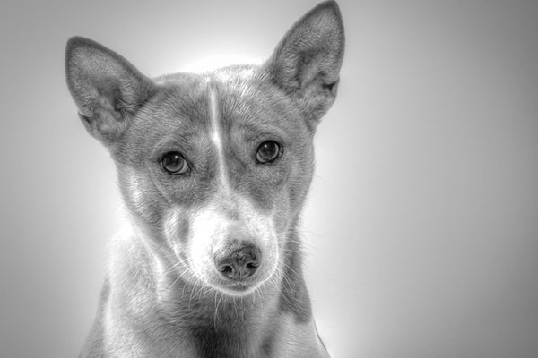 How long can a basenji be left alone?